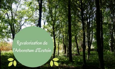 Project visual Re-valorisation d'un Arboretum