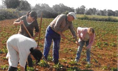 Visueel van project Chavigny, les jardins des amis de la solidarité