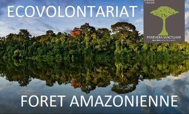 Project visual Ecovolontariat dans la forêt amazonienne