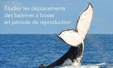 Project visual Etudier les déplacements des baleines à bosse dans leurs zones de reproduction.
