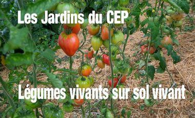 Visueel van project Aux jardins du CEP: Légumes vivants sur sol vivant