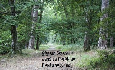 Visuel du projet Séjour scolaire dans la forêt de Fontainebleau