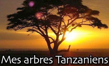 Visuel du projet Tanzanian trees