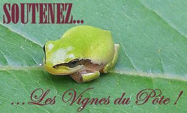 Project visual Les Vignes du Pote