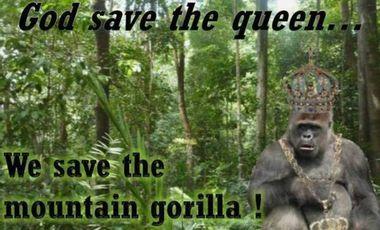 Visueel van project God save the queen, We save the mountain Gorilla