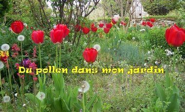 Project visual Du pollen dans mon jardin