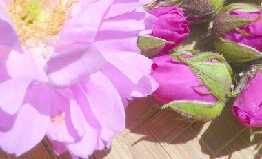 Visueel van project Achat d'un distillateur pour pétales de roses