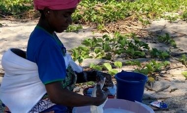 Visueel van project Création d'emplois pour les femmes d'Ampazony. Potager et jardin botanique.