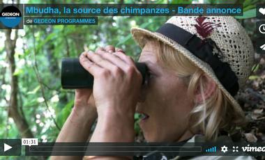 Visuel du projet Mbudha, la source des chimpanzés - le film