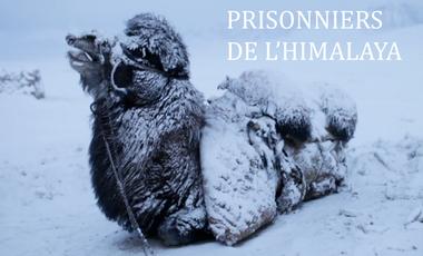 Visuel du projet Prisonniers de l'Himalaya