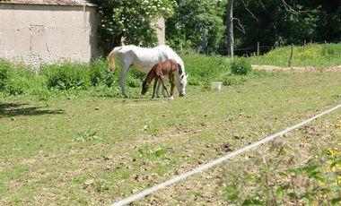Visueel van project Les cavaliers de Chanteloup ont besoin de votre aide !