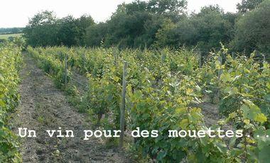 Visuel du projet Un vin pour des mouettes...