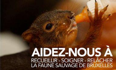 Project visual Du matériel médical pour la faune sauvage de Bruxelles