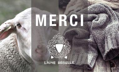 Project visual Laine Rebelle : renaissance d'une filière laine