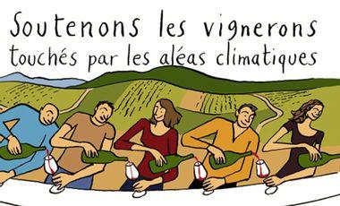 Visuel du projet Vendanges Solidaires