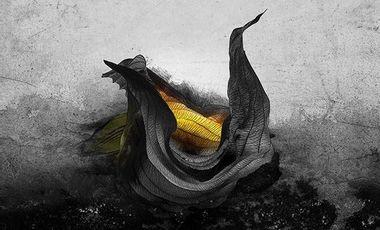 Project visual Les îles noires