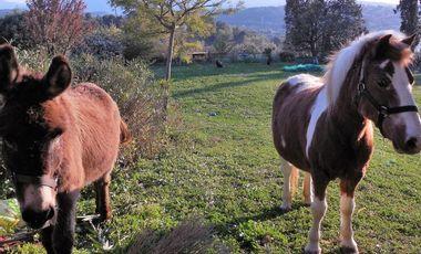 Visueel van project De la production de légumes locale et naturelle sur Grasse, ça vous intéresse?