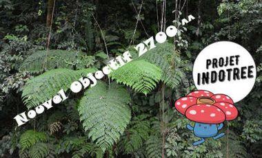 Visuel du projet Projet Indo Tree : des Hommes, une forêt et la Rafflesia