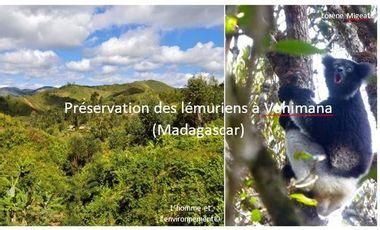 Visueel van project Préservation des lémuriens à Vohimana (Madagascar)