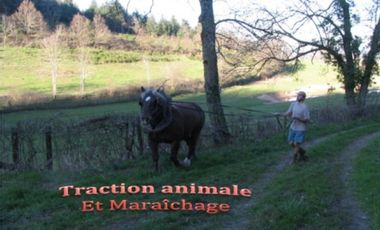 Project visual Traction Animale