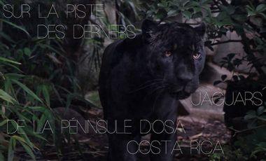 Visuel du projet Sur la piste des derniers jaguars de la péninsule d'Osa - Costa Rica