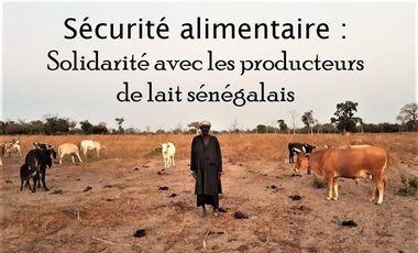 Visueel van project Sécurité alimentaire : Pour une production de lait local sénégalais