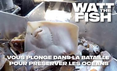 Visuel du projet Watt The Fish, le documentaire contre la pêche électrique