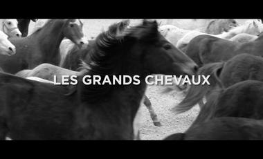Visuel du projet Les Grands Chevaux