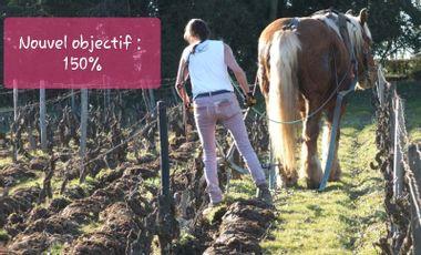 Project visual Retour du cheval dans les vignes