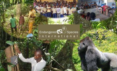 Project visual Sauvons les Grands Singes du Congo