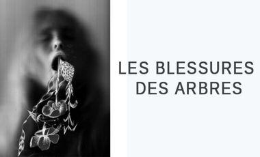 Visuel du projet Les Blessures des arbres
