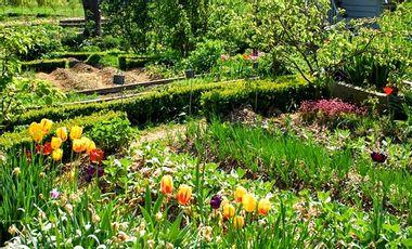 Project visual Création d'un jardin potager en permaculture. Refuge de la biodiversité