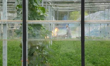 Visuel du projet Anthropologie autour des semences potagères