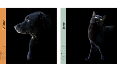 Visuel du projet Studio BasseCour - Collection pocket-