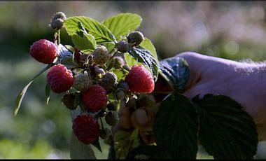 Visuel du projet Création d'un atelier de transformation de petits fruits rouges bio