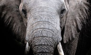 Visuel du projet JOIN THE HERD WITH ELEPHANTS ALIVE NGO