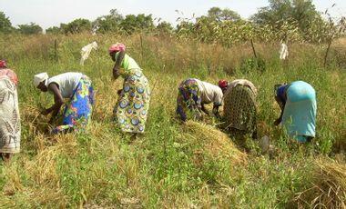 Project visual Forage pour des femmes au Burkina Faso