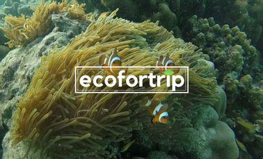 Visuel du projet Eco4trip - Voyager autrement la planète