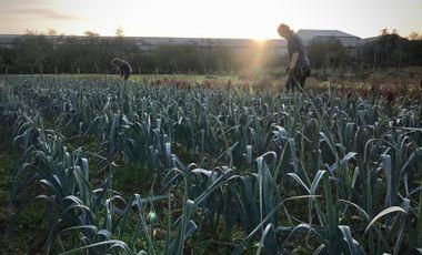 Visueel van project Opkweekserre voor bioboerderij Lincelam