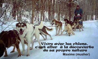 Visuel du projet TRAVAIL DE RECHERCHE / Relations multi-espèces : chiens de traîneau et musher