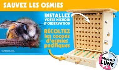 Project visual Les Dorloteurs d'Abeilles : observez et récoltez vos cocons d'osmies pacifiques