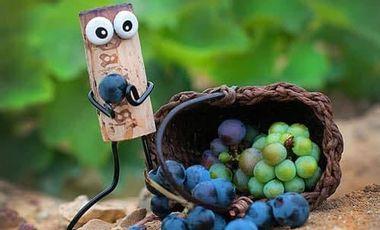 Visuel du projet Des plants de vigne pour le Petit Bouchon