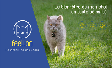 Visueel van project Feelloo, le médaillon intelligent de votre chat