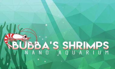 Visueel van project Bubba's Shrimps - Nano aquarium