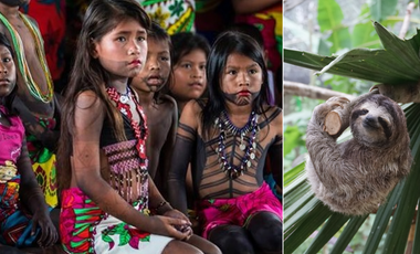 Visueel van project Replanting the forest of the indigenous Embera people