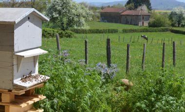 Visueel van project Des Abeilles pour le Rucher Poète