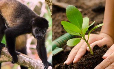 Visuel du projet More Trees for Monkeys