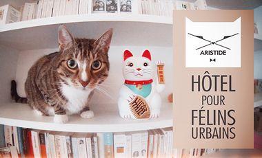Project visual ARISTIDE - le 1er hôtel pour chats à Paris