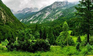 Visuel du projet planté des arbres