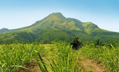 Project visual Reportage : Soutenir l'écologie caribéenne